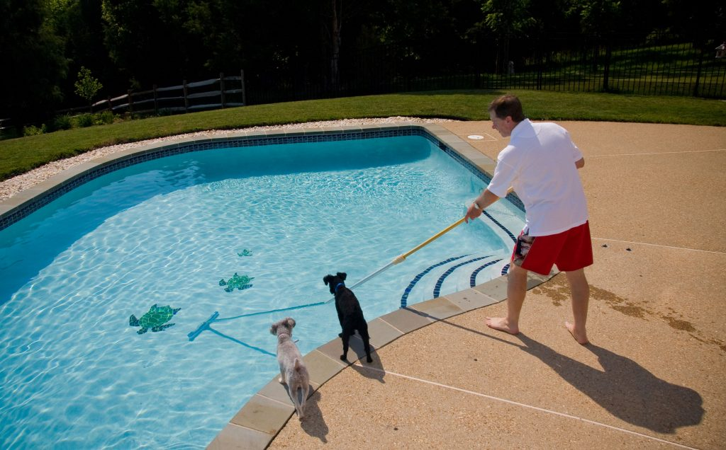 dog pool green chemicals chemical clear algae bioguard