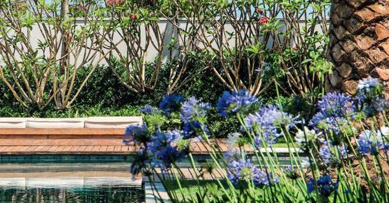 agapanthus flowers plantings