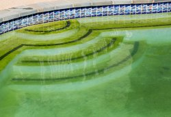 green pool chemicals cleaning bioguard algae